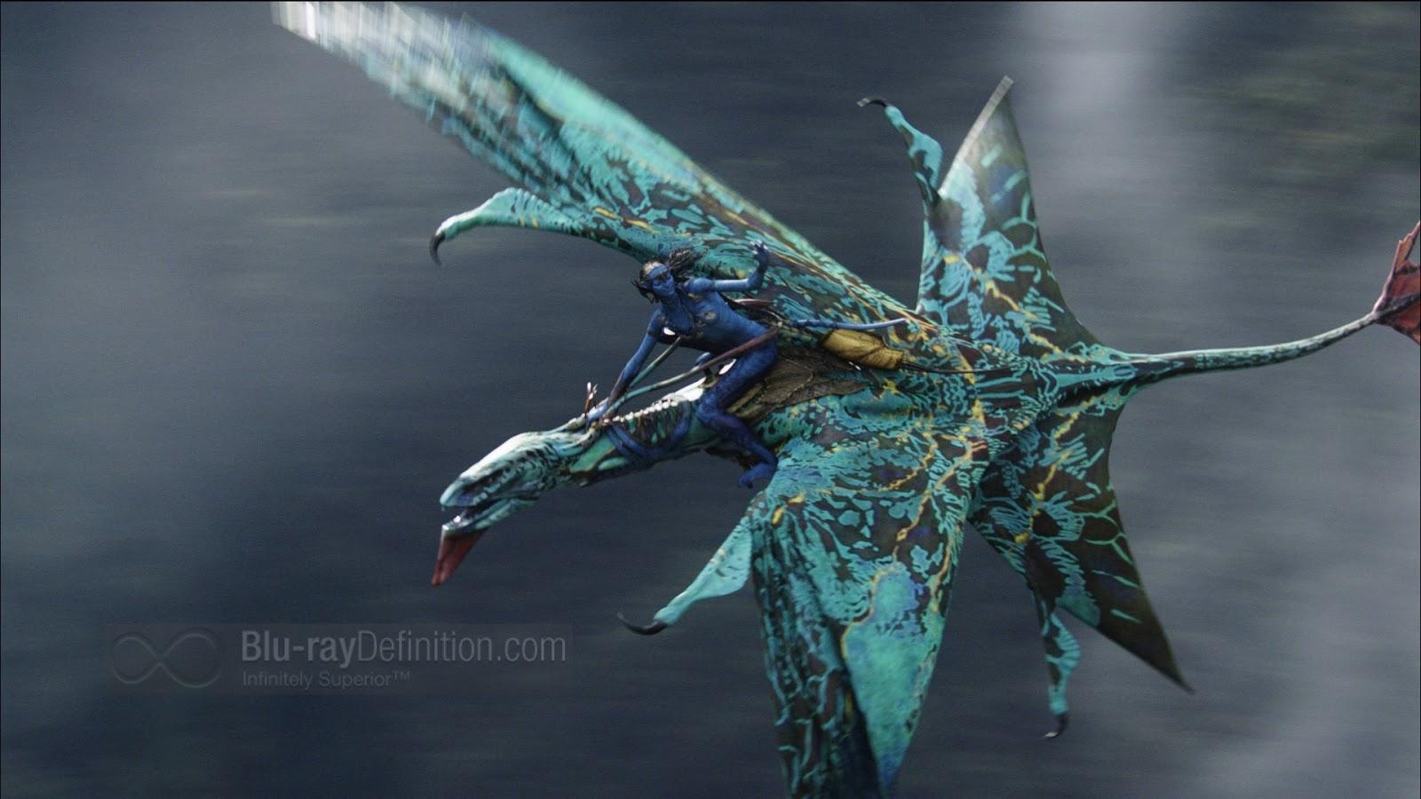 Avatar bird