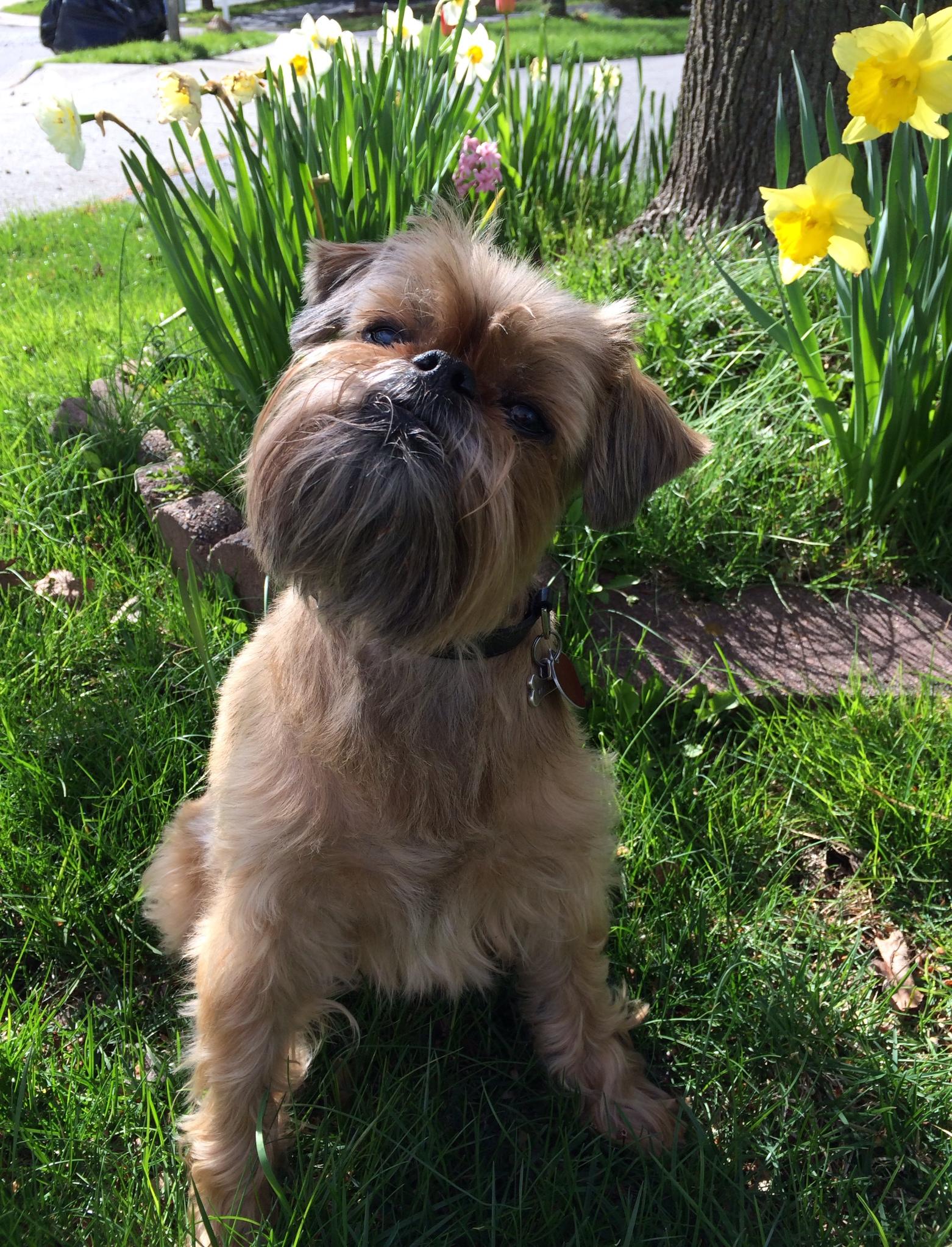Saying Goodbye to My Dog Oscar