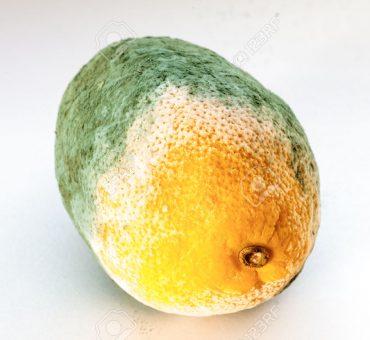 Lady Bunny Spikes Beyonce's <i>Lemonade</i>